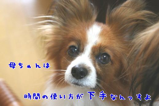 d0013149_0142351.jpg
