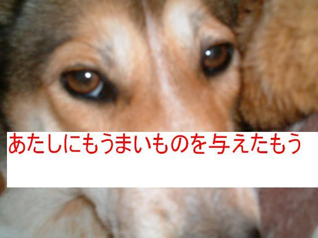 b0069163_1132825.jpg