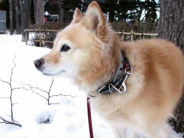 犬の散歩_e0100772_2327799.jpg