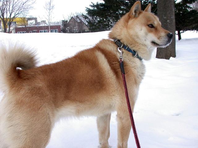 犬の散歩_e0100772_2329771.jpg