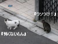 f0091785_14122090.jpg