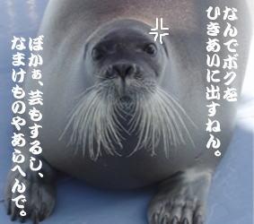 c0093096_1353822.jpg