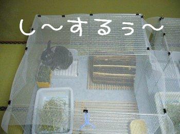 b0081503_20111513.jpg