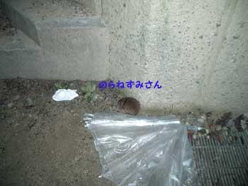 b0090938_20255096.jpg