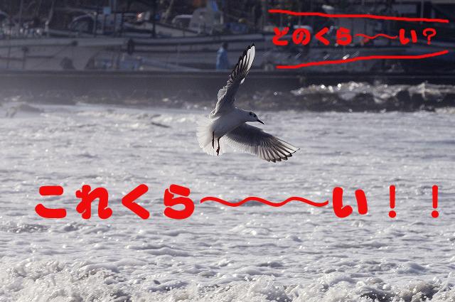 d0103100_19354774.jpg