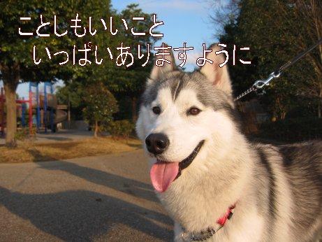 f0112407_1558458.jpg