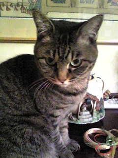 キナコの正月~猫編~_f0115311_22413969.jpg