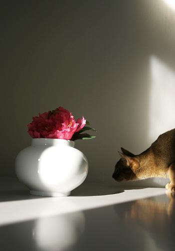 [猫的]暗いかな・・・_e0090124_7531987.jpg
