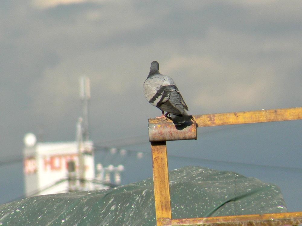 港の雑然とした一角でハトさん_e0088233_21164876.jpg