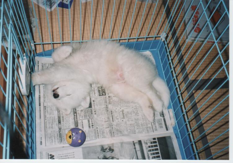 子犬時代のレオ_f0128542_23252851.jpg