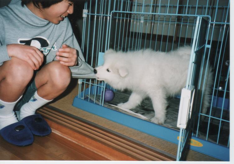 子犬時代のレオ_f0128542_23262936.jpg