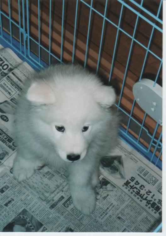 子犬時代のレオ_f0128542_23322353.jpg