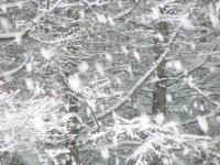 大雪です!?_f0019247_12133136.jpg