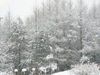 大雪です!?_f0019247_12134735.jpg