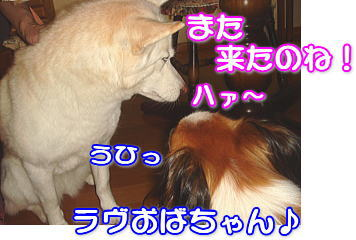 f0011845_105235100.jpg