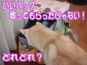 f0011845_10532358.jpg