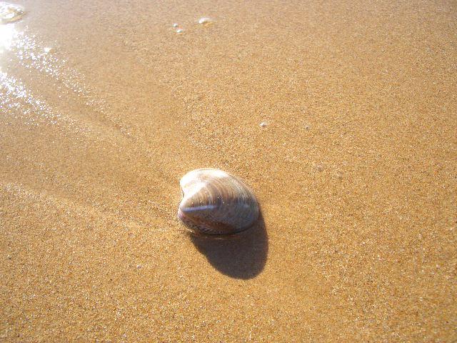 冬の海  バゥ_d0084229_395592.jpg