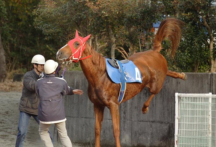 2007年1月1日(月) 高知競馬 9R カドと愉快な仲間特別_a0077663_9295155.jpg
