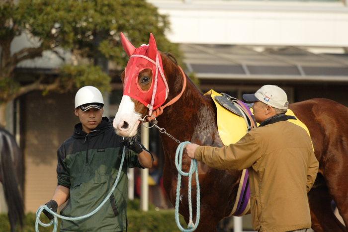 2007年1月1日(月) 高知競馬 9R カドと愉快な仲間特別_a0077663_9321349.jpg