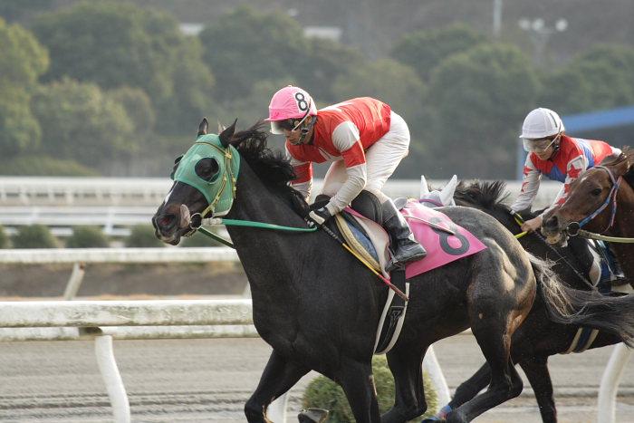 2007年1月1日(月) 高知競馬 9R カドと愉快な仲間特別_a0077663_936178.jpg