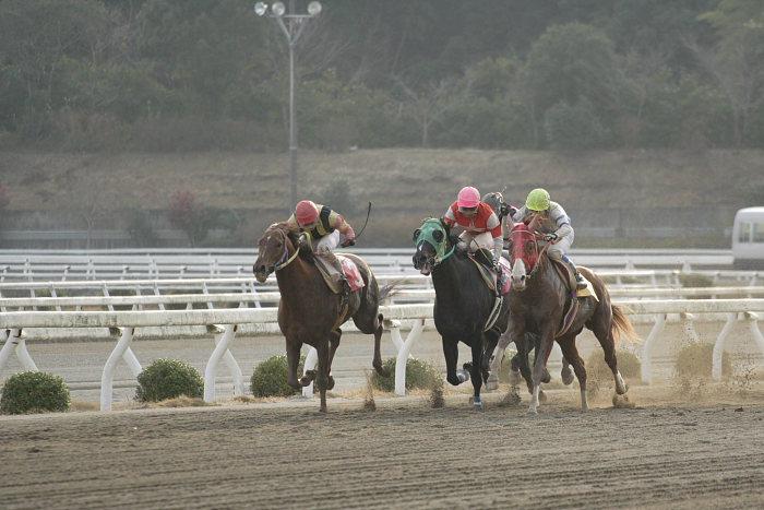 2007年1月1日(月) 高知競馬 9R カドと愉快な仲間特別_a0077663_9391964.jpg