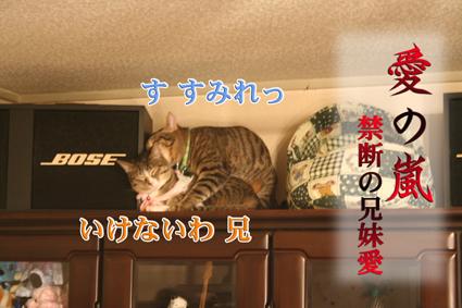 f0101903_21485915.jpg