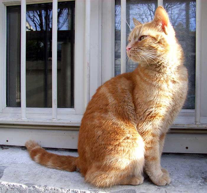ピンホール写真の撮影(2) - モンマルトルの猫_f0117059_1439409.jpg
