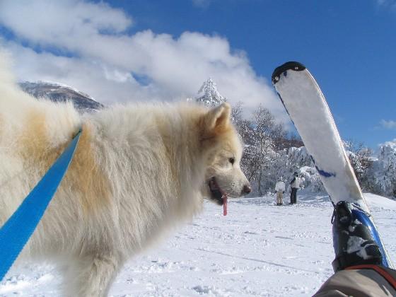 スキーシーズン!_f0128542_23322897.jpg