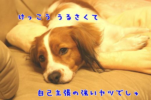 d0013149_0202830.jpg