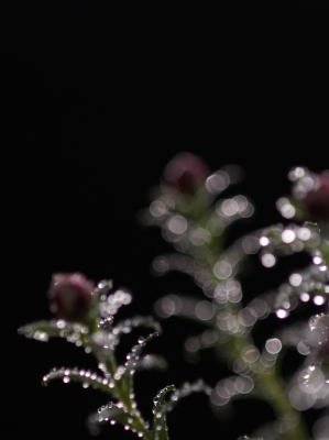 画像合成(花かんざし)_f0018464_1971383.jpg
