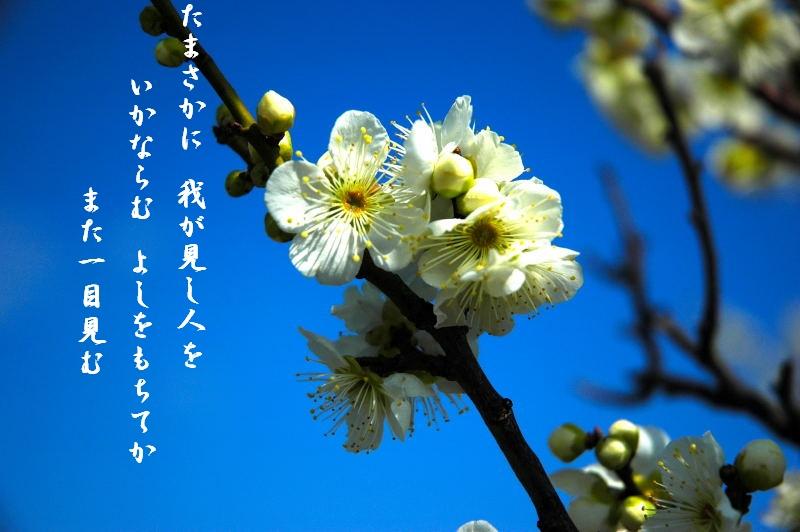 d0061579_15505239.jpg