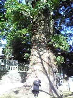 木のある風景_f0115311_23294617.jpg
