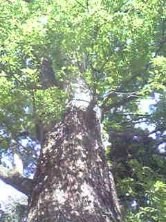 木のある風景_f0115311_2329462.jpg
