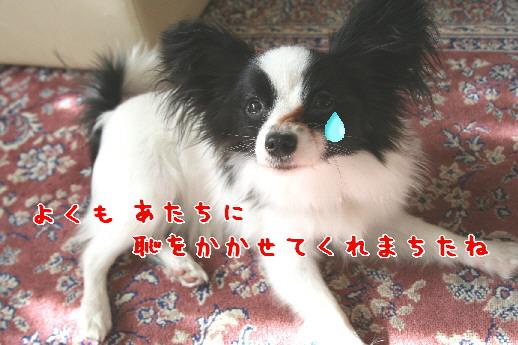 d0013149_0402191.jpg