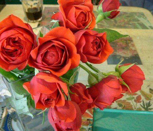 オークリーフ(市川バラ園さんの新種のバラ) _f0049672_1451685.jpg