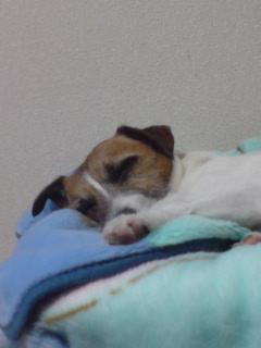 犬の細やかな心_c0099133_4105834.jpg