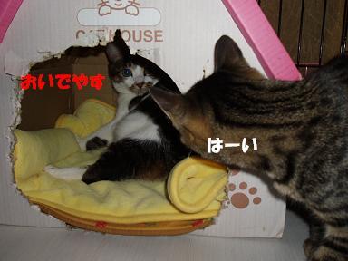 c0000189_1644521.jpg