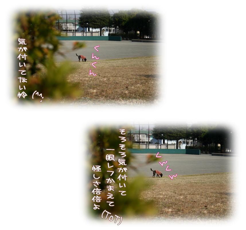 f0109418_134023.jpg
