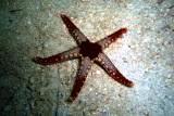 [ダイビング]目立たない生物たち_a0043520_1838880.jpg