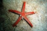 [ダイビング]目立たない生物たち_a0043520_18393490.jpg