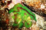 [ダイビング]目立たない生物たち_a0043520_1841497.jpg