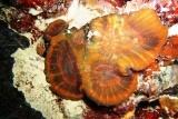 [ダイビング]目立たない生物たち_a0043520_1841971.jpg