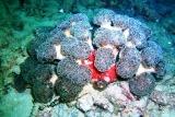[ダイビング]目立たない生物たち_a0043520_18432274.jpg
