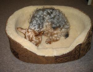 クッションを取った状態のベッド。中にわんこが入って、匂いをクンクン嗅いでいる様子。