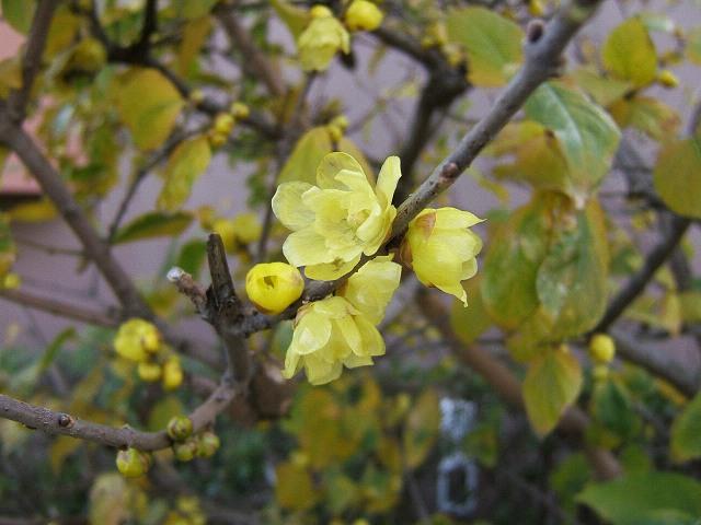 冬の花もまた_e0089232_13122722.jpg