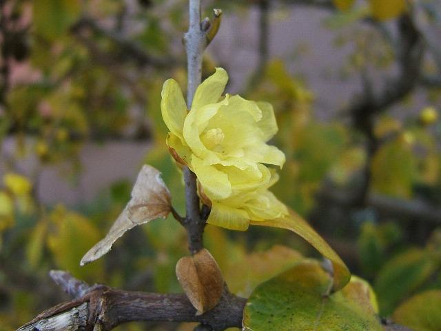 冬の花もまた_e0089232_13123657.jpg