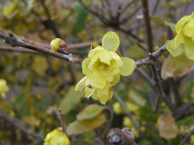 冬の花もまた_e0089232_13124353.jpg