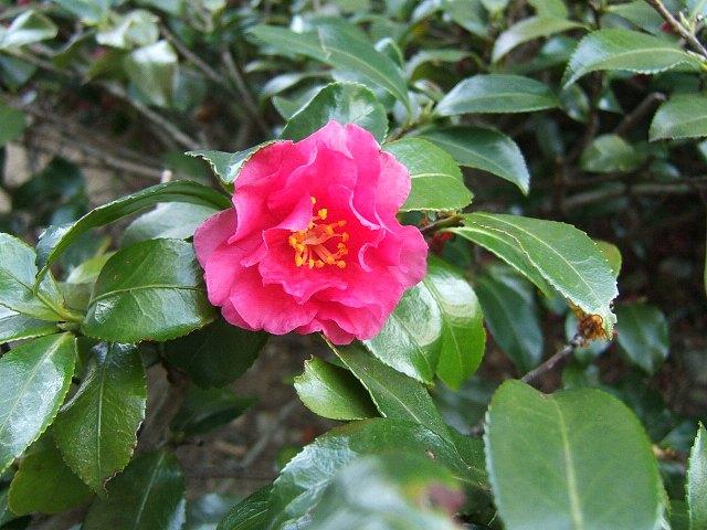 冬の花もまた_e0089232_131297.jpg