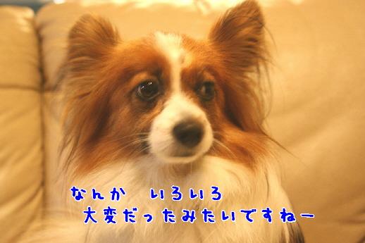 d0013149_1185230.jpg