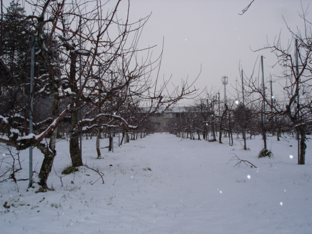 やっと雪が。_e0019167_10524866.jpg